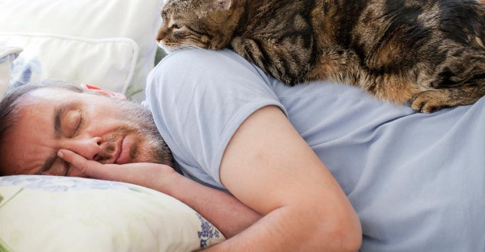 Solving Your Cat's Sleeping Problems