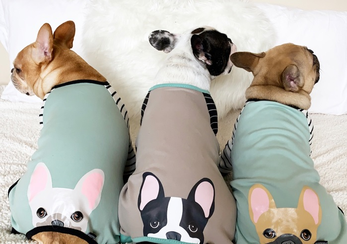 Adopt A Frenchie Dog