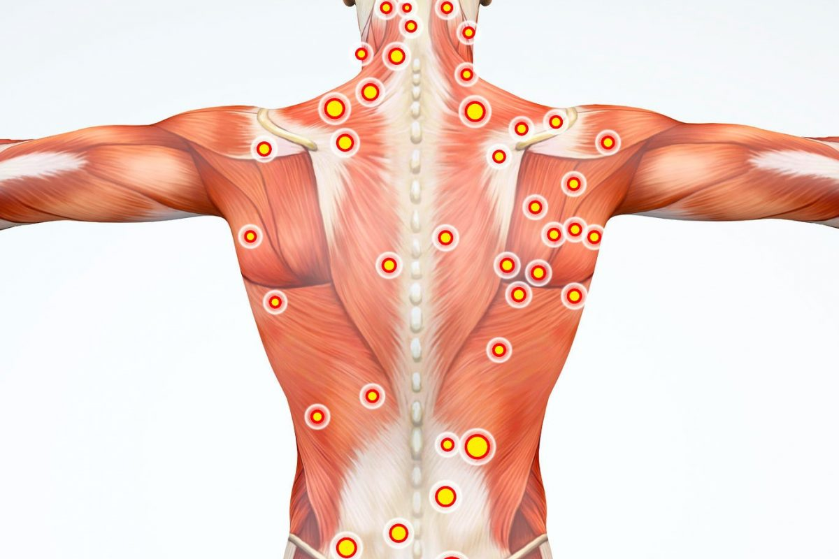 It can launch the constricted regions within the muscles.